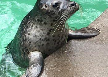 Aquarium of Niagara Brings Back $7.16 Day for 7/16 Day 2021