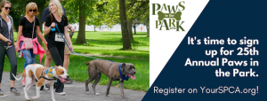 Paws in the Park - SPCA Event
