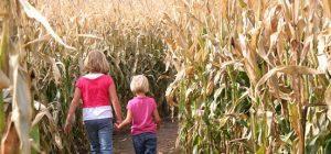 Cambria Corn Maze