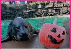 Halloween Happenings, Aquarium of Niagara, Welcome 716, Halloween event