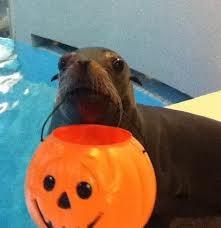 Halloween Happenings at Aquarium of Niagara