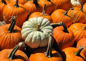 The Pumpkin Fiesta at Becker Farms