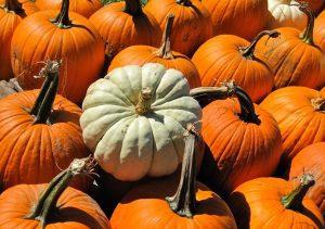 The Pumpkin Fiesta at Becker Farms