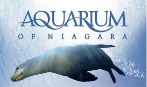Aquarium of Niagara logo with sea lion
