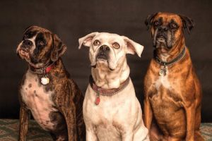 Rally for Rescues Pets Spring Expo