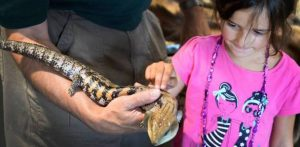 NYPA Wildlife Festival, Niagara Power Vista