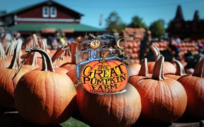 7 Reasons to Visit The Great Pumpkin Farm this Fall
