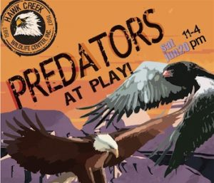 Hawk Creek, Predators at Play, Welcome 716