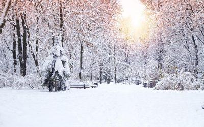 A Buffalo Niagara Snow Day