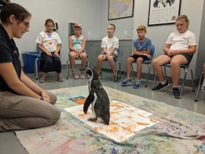 Penguine Painting Enrichment Session, Aquarium of Niagara, Welcome 716