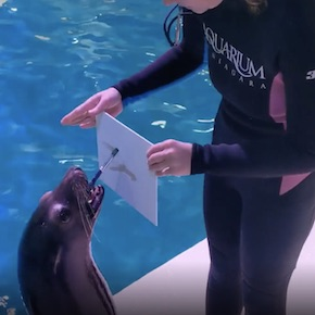 Sea Lion Painting Session