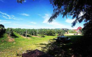 Cabin Retreats at Becker Farms, Vizcarra Vineyards, Welcome 716