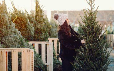 Christmas On The Tree Farm: Exploring WNY's U-Pick Tradition