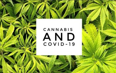 Could Cannabis have a Role in the Fight against COVID-19?